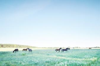 Leerheit by Piet Truhlar